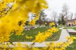Blütenpracht umgibt das Abenteuer-Golf im Bad Bellinger Kurpark