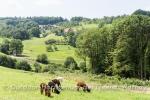Rathay-Sasbachwalden-Ortenau-039