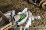 Wellnessoase für Ziegen