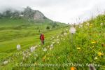 Blütenpracht mit Bergsicht
