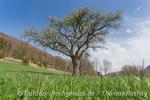 Umso grüner die Frühlingswiesen