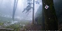 Auch im Nebel gut sichtbar - die Ebersteiner Rose als Wegzeichen