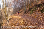 Sonnige Herbstwälder 1