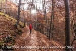 Sonnige Herbstwälder 2