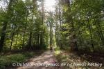 Der Schwarzwald kann auch Sonne