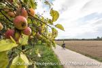 Radeln durch den Obstkorb Ortenau