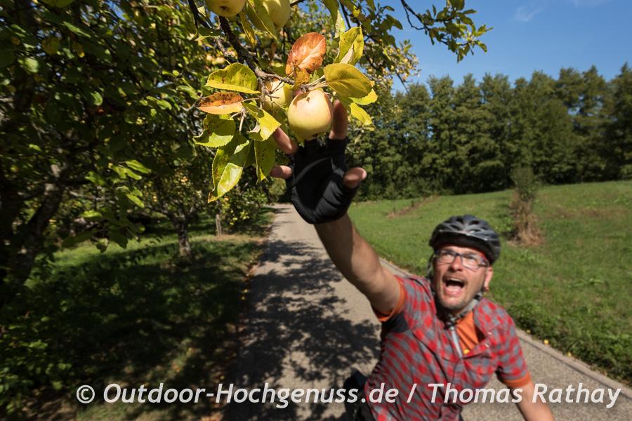 Äpfelpflücken während der Fahrt ist riskant.