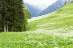 Wanderer auf blühenden Wiesen