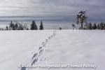 Spuren im Schnee führen zur genialen Aussicht
