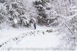 Entlang des verschneiten Hausbachs kurz vor Weiler - Simmerberg