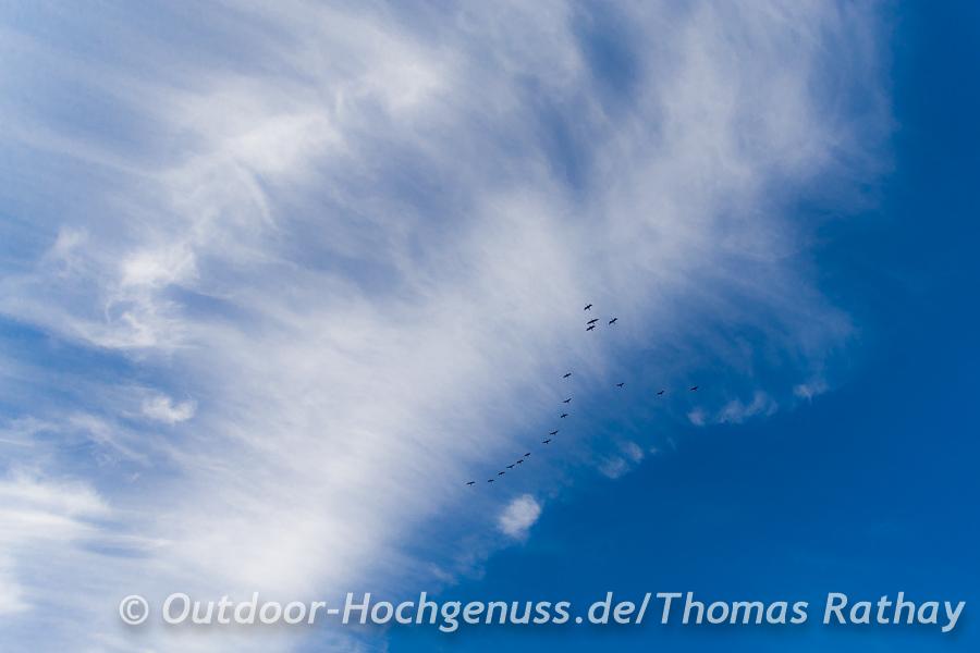Zugvögel über dem Westhavelland
