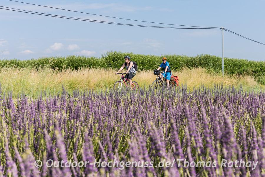 Was wäre die Provence ohne Lavendelfelder?