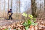 Waldwege als Abwechslung in der Weingegend