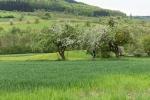 Ein Abstecher vom Wiiwegli ins Eggenertal lohnt im Frühjahr besonders