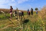 Wandern mit Ziegen im Oderbruch