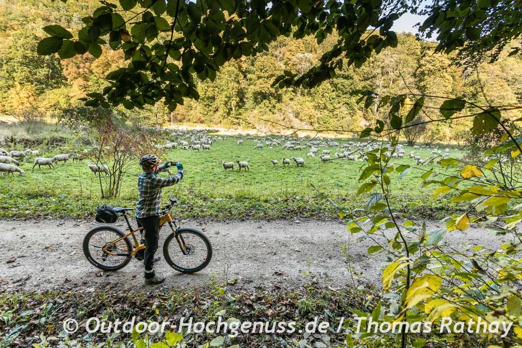 Schafe als Augenweide für die Hobbyfotografen