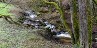 Der Laufbach läuft nicht, nein er fließt. ;-)