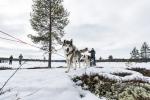 Über Seen und durch Wälder mit den Huskies