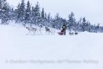 Die Huskies wollen nur eines: Laufen!