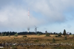 Im Hintergrund der SWR-Funkturm auf der Hornisgrinde