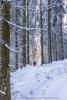 Sonnenscheinwerfer im Schwarzwald