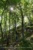 Wegweiser im Wald zeigen die Richtung.