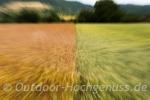 Kornfelder soweit das Auge reicht in Owen unter Teck.