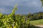 Blick auf Sulzburg