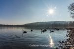 Enten und Schwäne schnattern im sonnigen Bodensee.