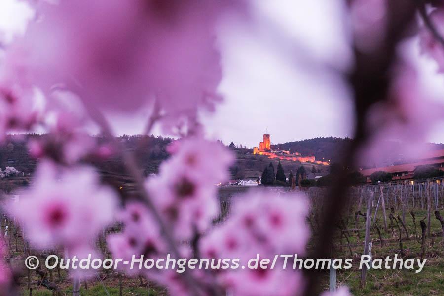Die Sehenswürdigkeiten entlang des Pfälzer Mandelpfads sind rosa illuminiert.