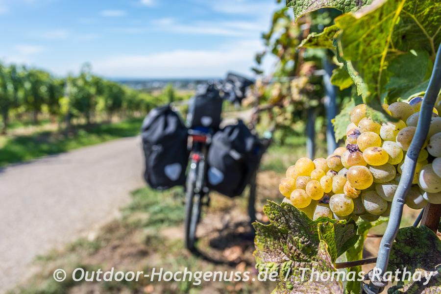Radelnd durch das Obst- und Weinparadies der Ortenau
