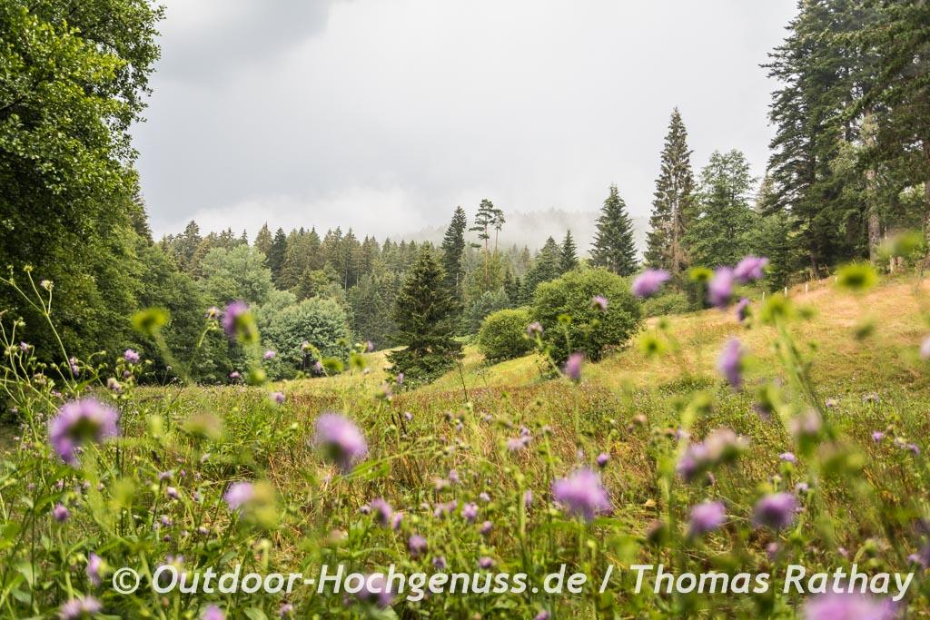 Letzte Meile über die Blumenwiese auf dem Weg zum Trekking-Camp