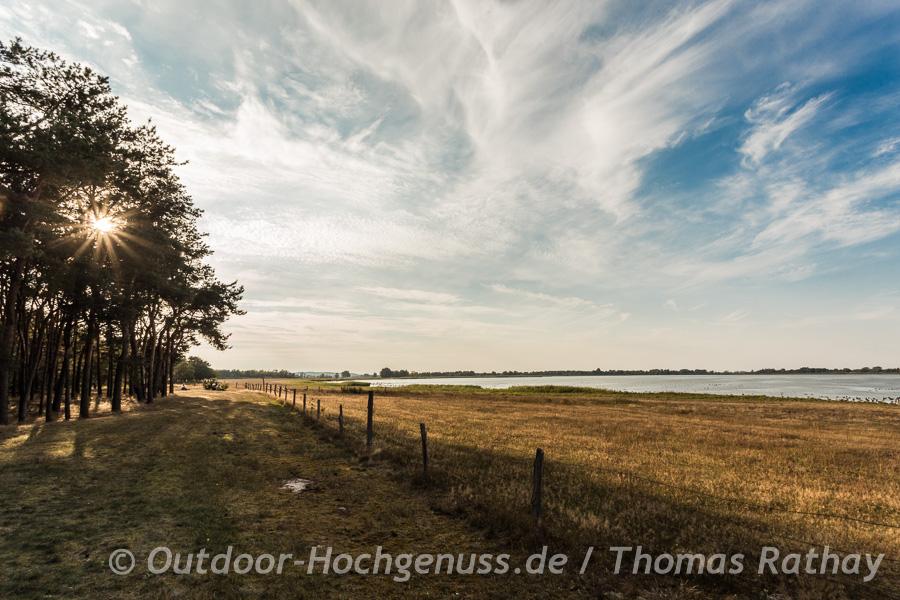 Wasservögel auf dem Gülper See im Havelland