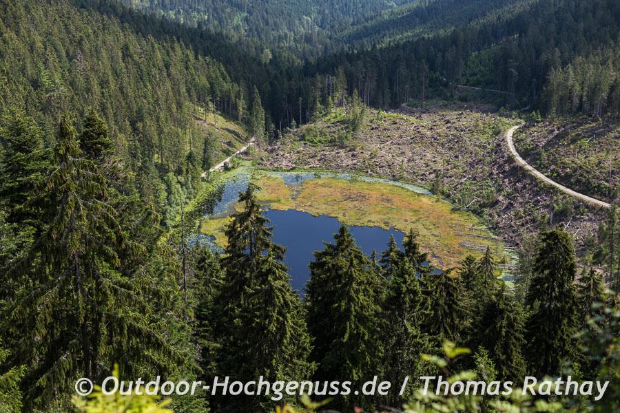 Vom Seeblick aus ist gut zu erkennen, wo und mit welcher Wucht der Sturm 2012 am Huzenbacher See gewütet hat.