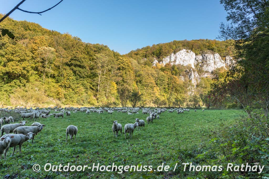 Felsen und Schafherde auf der Schwäbischen Alb auf der Berg Bier-Radtour.