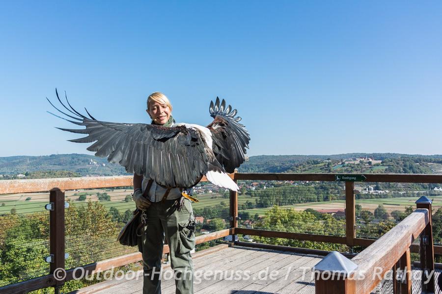 Greifvogel Flugschau auf Burg Guttenberg