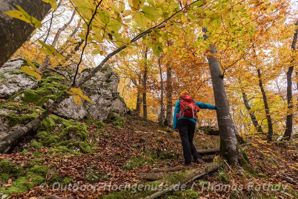 Buntes Herbstlaub auf dem Grafensteig