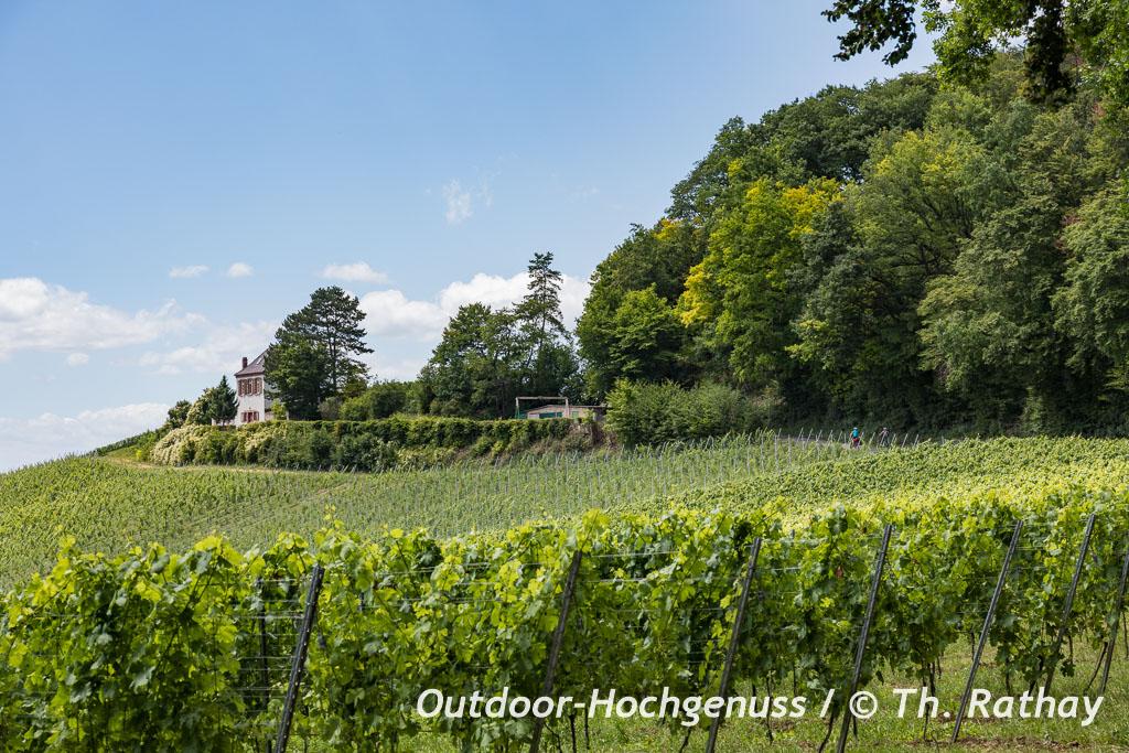 Breisgau ist Weinland