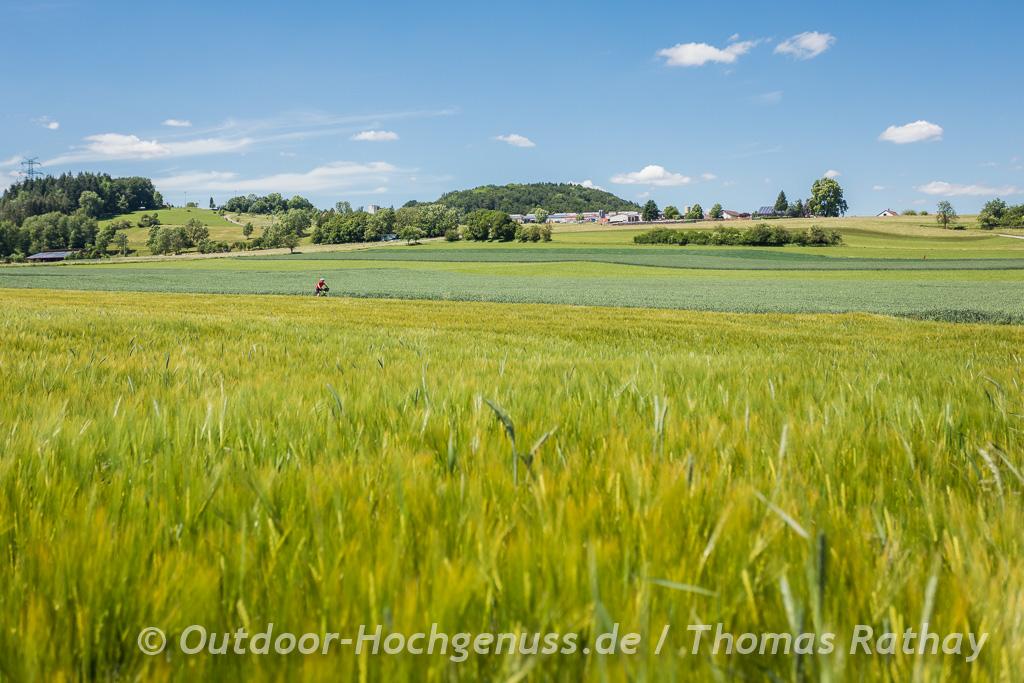 Radfahren durch Kornfelder