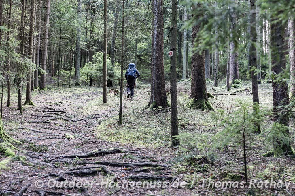 Wurzeliger Pfad durch den Bayerwald