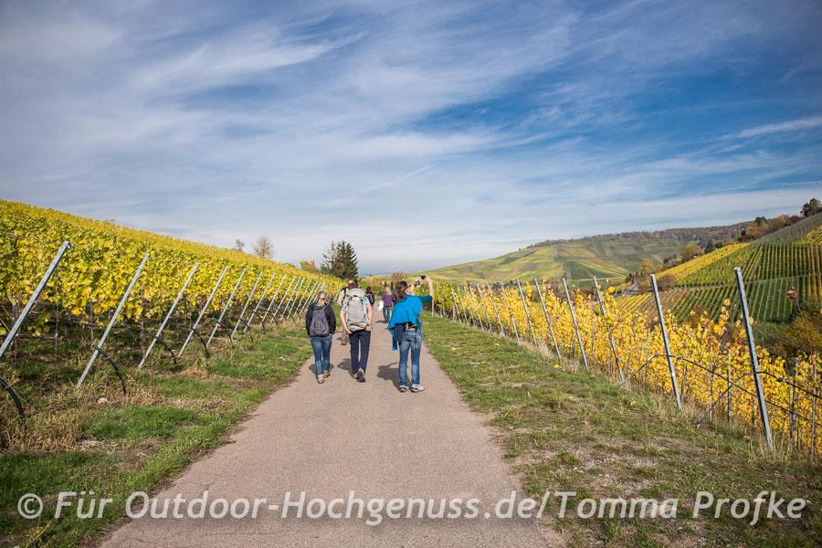 Sonnige Wanderung durch den Untertürkheimer Weinberg.