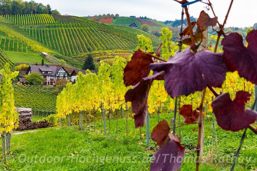 Herbstfarben in Sasbachwalden