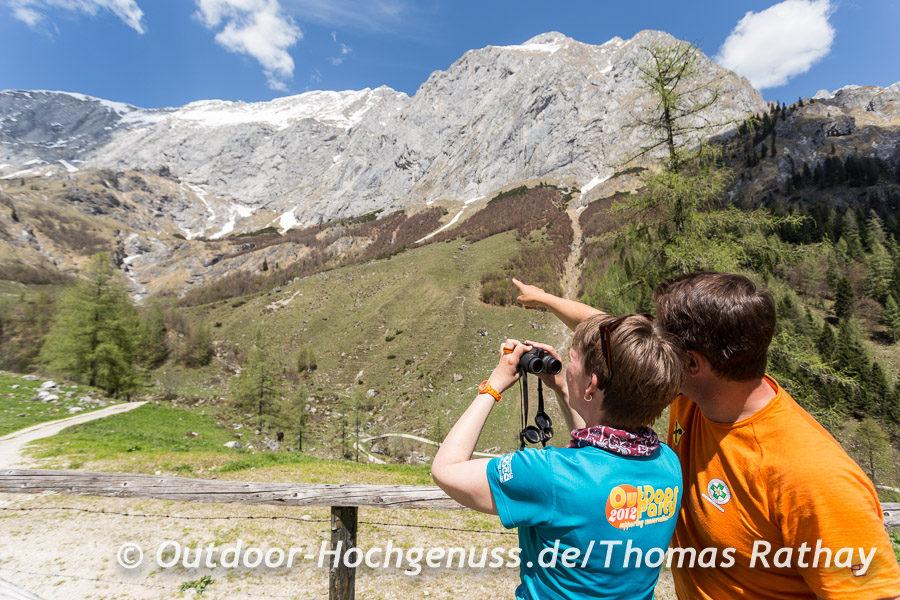 Gemsen suchen in den Alpen