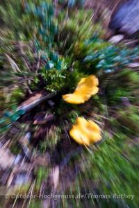 Rathay-Schweden-Kanu-Wander-Glaskogen-009