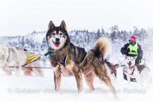 Schlittenhundetour