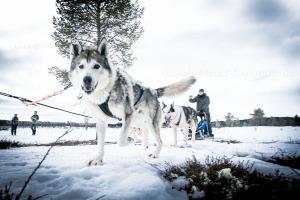 Husky- und Schneescootertour