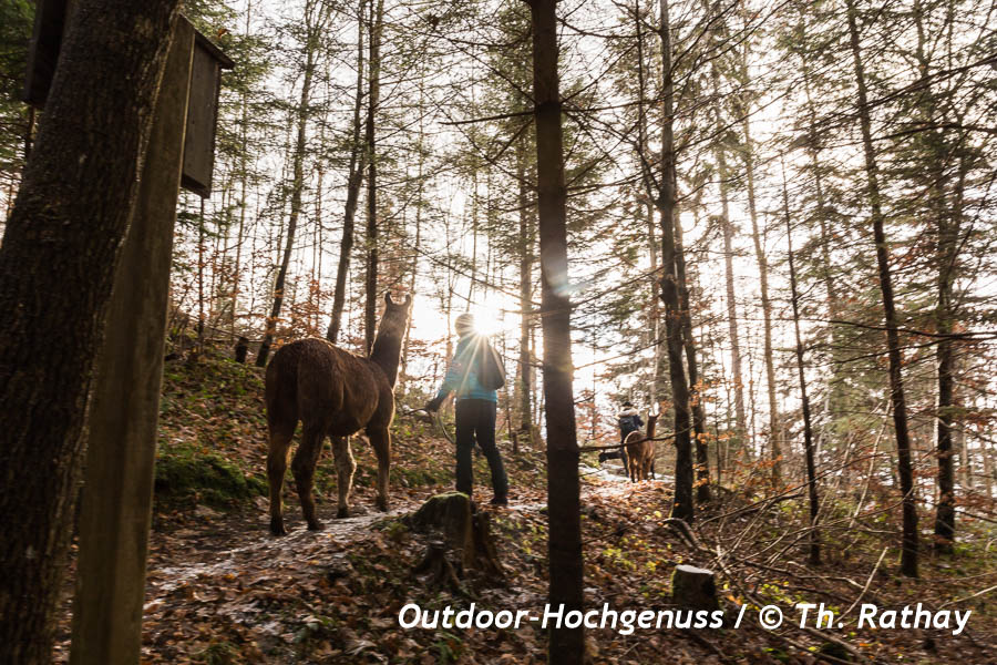 Lamawanderung, Tier, Sonne, Liechtenstein
