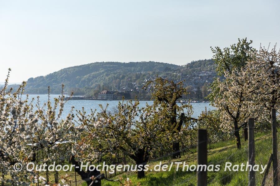 Bodman-Ludwigshafen lockt!